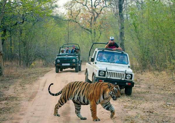 Wildlife Safari At Ranthambore National Park